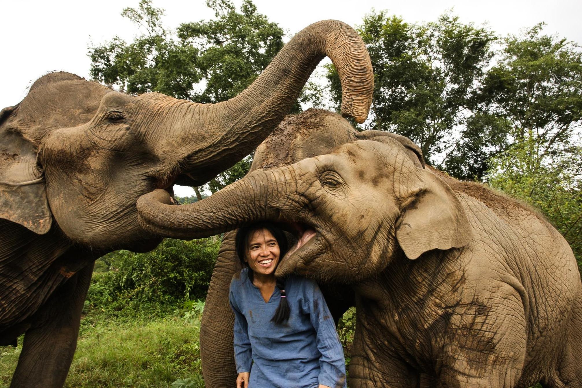 ဆင္မ်ားႏွင့္အတူ ေတြ႔ရသည့္ Ms. Sangduen Lek Chailert (ဓာတ္ပံု - Save Elephant Foundation)
