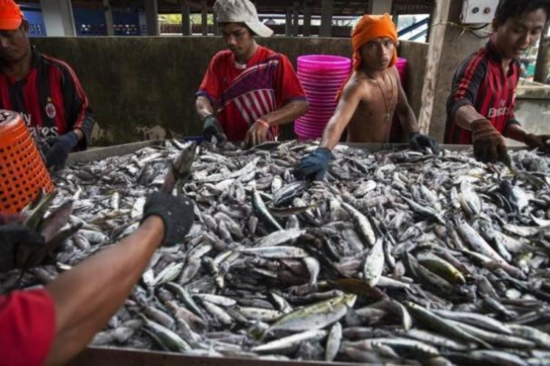 ထိုင္းငါးဖမ္းလုပ္ငန္းခြင္က ျမန္မာအလုပ္သမားမ်ား (ဓာတ္ပံု – Reuters)